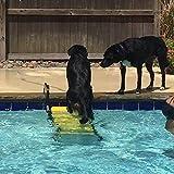 WaterDog Adventure Gear Dog Ladder for Swimming Pool