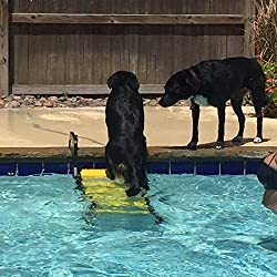 The pool ramp helps your dog get out of the water