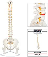 spine models for education