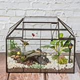 "Ferrisland Glass Terrarium Case House Planter Container for Succulents Plants Flowers Orchids Foliage and More, 9.1""x7.3""x5.4"""