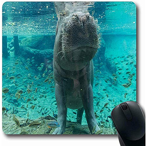 Gaming Pad,Blue Aquarium Hippopotamus Tampa Florida Animals Wildlife Green Busch Garden Zoo Attraction Beautiful Anti-Slip Rubber Mouse Pad Office Computer Laptop Game Mat,30X25Cm