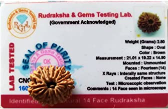 14 Mukhi Certified Rudraksha (Nepal)