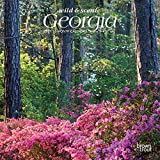 Georgia Wild & Scenic 2021 7 x 7 Inch Monthly Mini Wall Calendar, USA United States of America Southeast State Nature