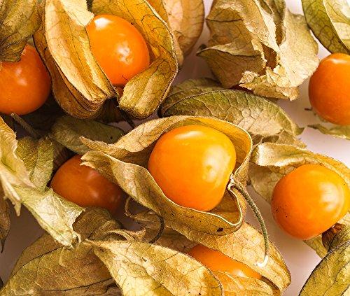 Cape Gooseberry, semi di Cherry Ground - Physalis peruviana -