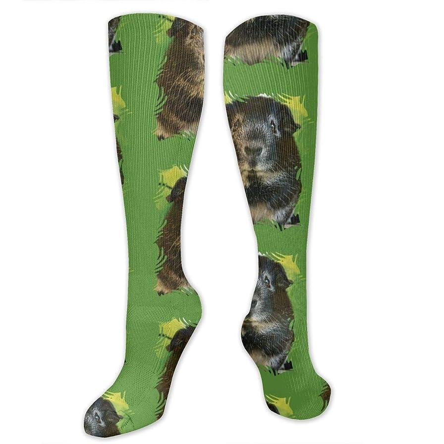 農学医学通行料金靴下,ストッキング,野生のジョーカー,実際,秋の本質,冬必須,サマーウェア&RBXAA Guinea Pig Socks Women's Winter Cotton Long Tube Socks Knee High Graduated Compression Socks