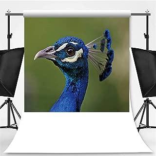 Peacock Profile Portrait Theme Backdrop Photo Backdrop Photography Backdrop,127969,6.5x6.5ft
