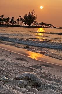 Posterazzi A sea Turtle Rests on The Beach at Sunset Near Kailua-Kona Island Hawaii United States of America Poster Print, (12 x 19)