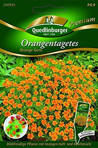 Orangen-Tagetes Orange GEM - Tagetes tenuifolia QLB Premium Saatgut Studentenblumen