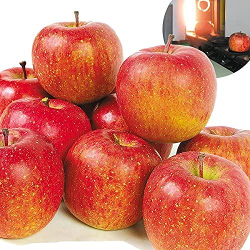 国華園 りんご 青森産 高糖度サンふじ 5� 1箱 食品