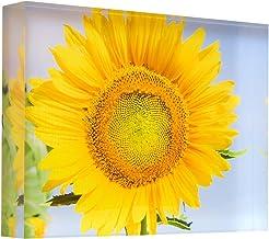 Flowering Sunflower in Summer Morning Sun Acrylic Block Photo Print Carl Chapman 3443 (30x20x4cm (12x8x1.6in))