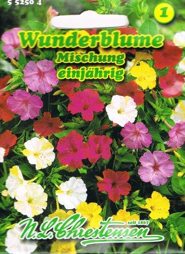 Wunderblume Mischung, einjährig,stark duftend, Rabattenpflanze, Kübelpflanze, 'Mirabilis jalapa'