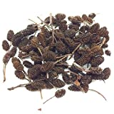 <span class='highlight'>Biotope</span> <span class='highlight'>Aquatics</span> <span class='highlight'>Ltd</span> ALDER CONES (100 ) - natural food for cherry crystal tiger shrimp