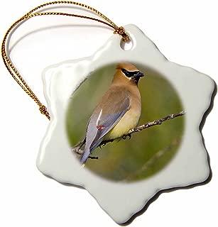3dRose orn_95658_1 Washington, Lake Sammamish, Cedar Waxwing Bird-US48 GLU0129-Gary Luhm-Snowflake Ornament, Porcelain, 3-Inch
