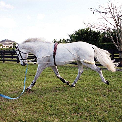 Pessoa Lunging System Horse