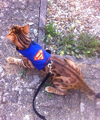 Mynwood Cat Jacke /Geschirre Superman Erwachsene Katze ausbruchsicher