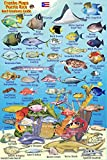 """Puerto Rico Reef Creatures Identification Guide Franko Maps Laminated Fish Card 4""""x6"""""""