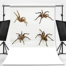 Set of Tarantula Isolated on White Background Photography Backdrop,067613 for Video Photography,Pictorial Cloth:6x10ft