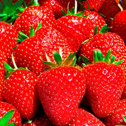 Everbearing Day Neutral Strawberry Plants - Best...