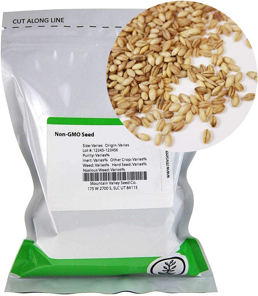 Organic Ranking TOP15 Hulless Sprouting Barley - Max 57% OFF Seed Non-GMO 1 Lb