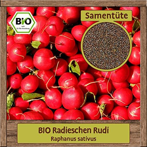 Samenliebe BIO Gemüse Samen Radieschen Rudi (Raphanus sativus) | BIO Radieschensamen Gemüsesamen | BIO Saatgut für 1m²