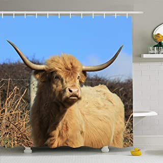 Ahawoso Shower Curtain Set with Hooks 66x72 Highland Horn Natural English Cow 1 Cattle Outdoor Cornwall Sky England UK Animals Wildlife Nature Waterproof Polyester Fabric Bath Decor for Bathroom