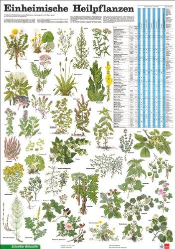 Schreiber Naturtafeln, Einheimische Heilpflanzen