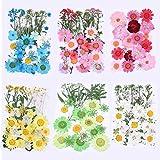 Lcoor 172 piezas de flores secas prensadas para manualidades, coloridas flores prensadas para bricolaje, velas de resina, colgante de uñas, manualidades, decoración floral