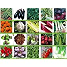 Viridis Hortus® - 20 Packs of Vegetable Seeds - Tomato, Celery, Leek, Pea, Mustard Red Zest, Carrot, Chicory, Turnip etc (20 Packets Included)