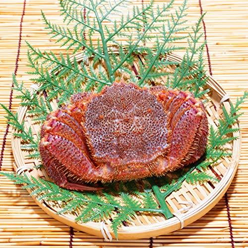 かにのマルマサ 北海道産 活毛蟹 450g 1尾 冷蔵品