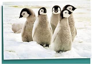 Best penguin note cards Reviews
