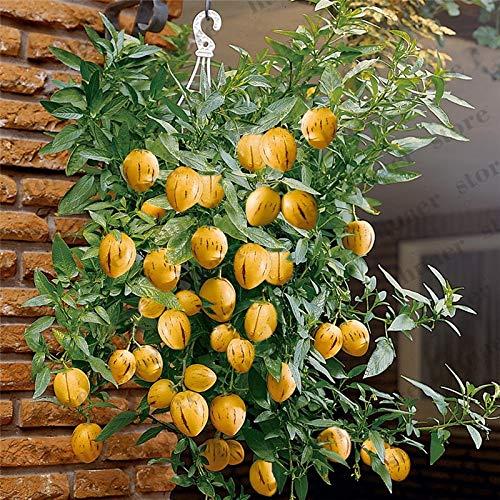 HONIC 200 pcsMelon Baum Bonsai, Pepino Pflanzen, Obstgarten, Non GMO, Bio-Obst