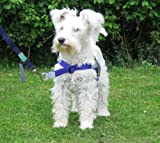 Non Pull Harness. Front Leading Stop Pull fitting dogs weighing between 18 - 35 Lbs (8 - 16 kgs) Girth size 16 - 24 inches (40 - 61 cms) Purple