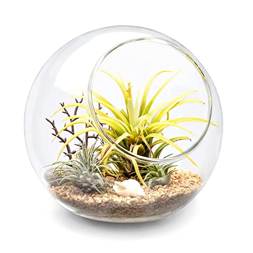 Plant Terrarium With Plants Amazon Co Uk