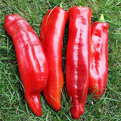 Samen für ca. 15 Pflanzen Marconi rot Paprika – Italienische Sorte, fruchtig aromatisch