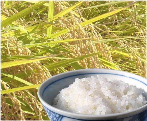 訳あり 米 新潟県産 中米 コシヒカリ 10kg BLコシ 令和元年産米