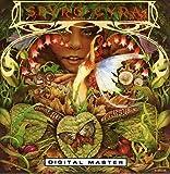 Songtexte von Spyro Gyra - Spyro Gyra