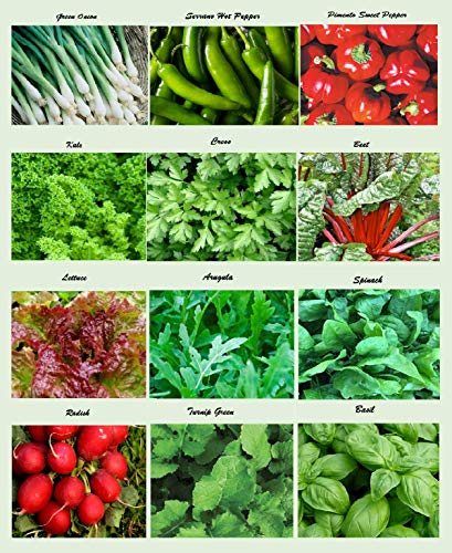 Set of 12 Assorted Organic Vegetable Seeds & Herb Seeds 12 Varieties Create a Deluxe Garden All Seeds are Heirloom, 100% Non-GMO Leaf Salad Green Lettuce Seeds, Pepper Seeds, Onion Seeds