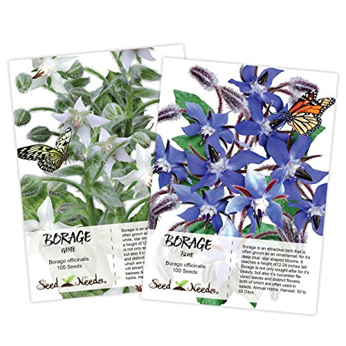 Seed Needs, Borage Seed Duo, (2 Individual Packets) Non-GMO Seeds