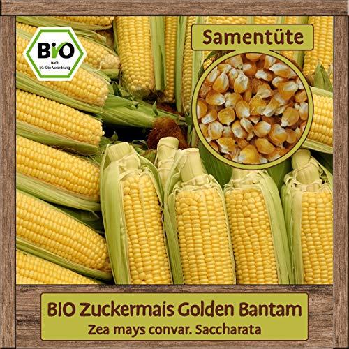 Samenliebe Hochwertige BIO Gemüse-Samen samenfeste Sorten Saatgut BIO DE-ÖKO-007 Geschenk Mix Set, Sorte:BIO Zucker-Mais Golden Bantam