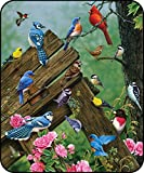 Everydayspecial Songbirds JQ Licensing Super Soft Flannel Throw Blanket with Sherpa Lining 50'x60'