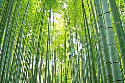 50pcs/sac plantes de bambou bleu, les graines de bambou, graines de bambou Moso, Phyllostachys plante souches nature, bricolage pour le chocolat maison et jardin