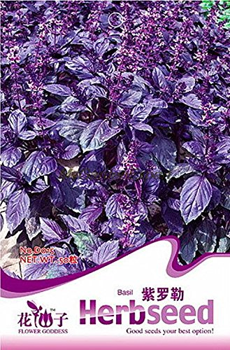 50pcs de vente Hot Seeds Violet Basil, Herb Seeds, aromatique des plantes comestibles Bonsai Plante en pot SeedsAndPlants Jardin Bricolage