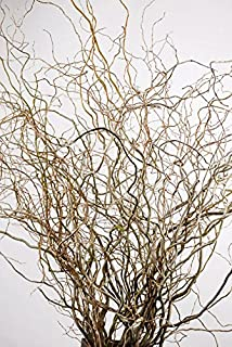 Wayhome Fair Natural Curly Willow Branches 36-40in (11 Branches) - Excellent Home Decor - Indoor & Outdoor