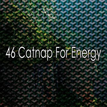 46 Catnap for Energy