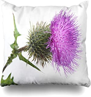 Ahawoso Throw Pillow Cover Decorative Square 18x18 Green Scottish Growth Color Thistle Bud On White Nature Purple Flower Desert Celtic Weed Petal Plant Zippered Pillowcase Home Decor Cushion Case