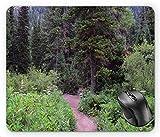 N\A Paisaje Árboles Salvajes Fotografía de paisajes Pasarela al Bosque Escapadas tranquilas de Fin de Semana Paisaje, Alfombrilla de ratón Multicolor