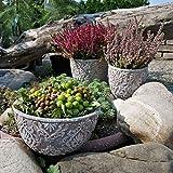 Plantas Maceta de cemento Jardinera para suculentas Macetas grandes de piedra resistentes a las heladas 19x10cm