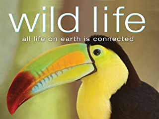 Best national geo wild videos Reviews