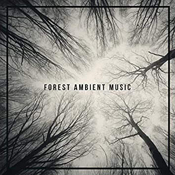 Forest Ambient Music: Collection of 15 Relaxing Sounds of Nature with Beautiful and Deeply Relaxing Ambient Music