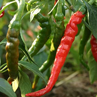 Chilli Cayenne Red 10 Chili Seeds Super HOT Spicy Spices Chile Vegetable Pepper